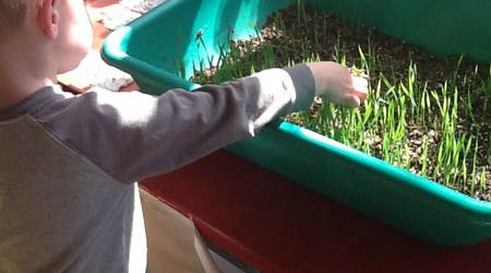 ECS child exploring grass growing in a container